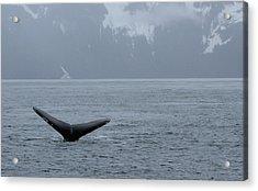 Whale Fluke Acrylic Print