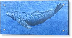 Whale In Surface Light Acrylic Print