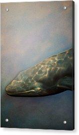 Whale Meet Again Acrylic Print by Jez C Self
