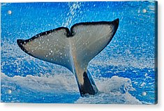 Whale Of A Tail Acrylic Print by Linda Pulvermacher