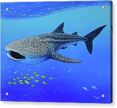 Whale Shark Acrylic Print by James Zeger