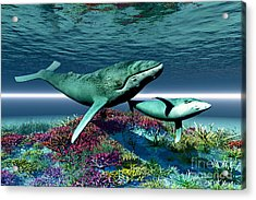 Whale Song Acrylic Print by Corey Ford
