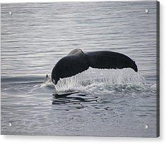 Whale Tail Waterfall Photo Acrylic Print by Judy Mercer