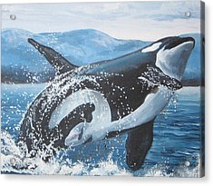 Whale Watching Acrylic Print by May Moore