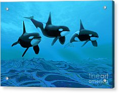 Whale World Acrylic Print by Corey Ford