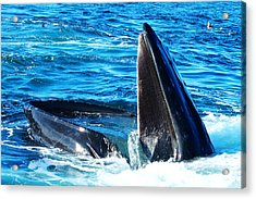 Whale's Opening Mouth Acrylic Print by Paul Ge