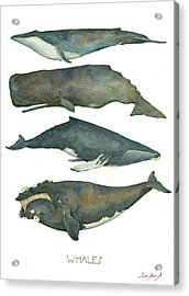 Whales Poster Acrylic Print by Juan Bosco