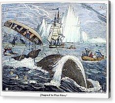 Whaling, 1833 Acrylic Print