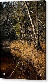 Wharton Forest Fall Acrylic Print