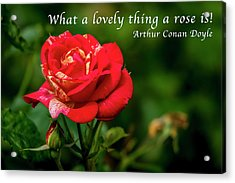 What A Lovely Thing A Rose Is Acrylic Print
