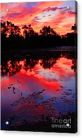 What A Morning Acrylic Print by Robert Pearson