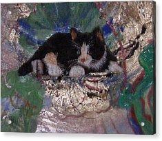What A Pretty Kitty Acrylic Print by Anne-Elizabeth Whiteway