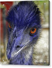 What Are You Lookin At Acrylic Print by DigiArt Diaries by Vicky B Fuller