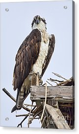 Acrylic Print featuring the photograph What Are You Looking At by Eddie Yerkish