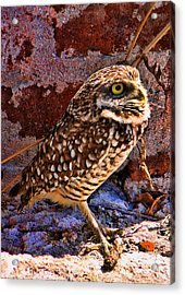 What Big Eyes I Have Acrylic Print
