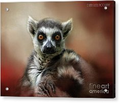 What Big Eyes You Have Acrylic Print by Kathy Russell