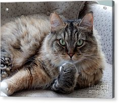 What Did You Say? Acrylic Print