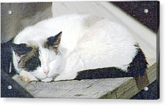 What Do Cats Dream Of #2 Acrylic Print