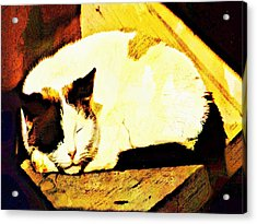What Do Cats Dream Of Acrylic Print