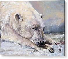 What Do Polar Bears Dream Of Acrylic Print