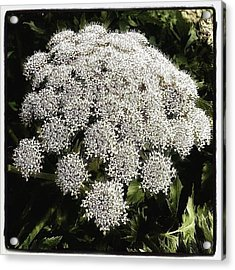 Acrylic Print featuring the photograph What Flower Is This? I Think It's by Mr Photojimsf