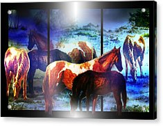 What  Horses Dream Acrylic Print