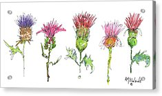 What Is It About A Thistle Fl006 Acrylic Print