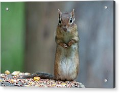 What Is Up With You Acrylic Print by Dan Friend