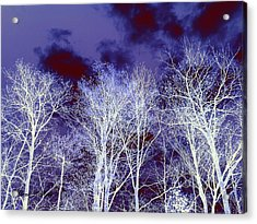 Acrylic Print featuring the photograph What Lies Above by Shana Rowe Jackson