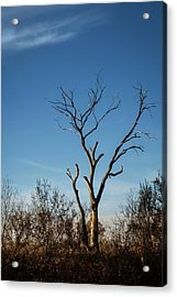 What Once Was Acrylic Print by Mary Lee Dereske