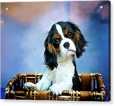 What Acrylic Print by Patricia Stalter
