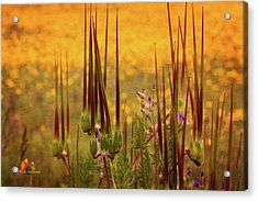 What Some Call Weeds Acrylic Print by Mick Anderson