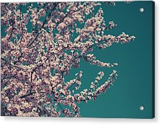 What This New Life Will Bring Acrylic Print by Laurie Search