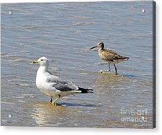 Outer Banks Obx Acrylic Print