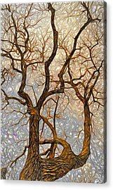 What We See The Mind Believes Acrylic Print by James Steele