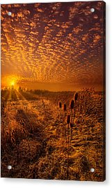 What Will Be Will Be Acrylic Print by Phil Koch