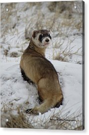 Whatare You Looking At Acrylic Print