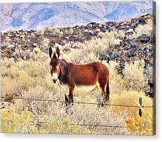 Whatcha Doing Acrylic Print by Marilyn Diaz