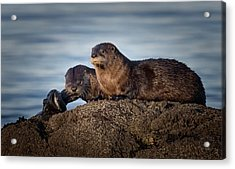 Acrylic Print featuring the photograph Whats For Dinner by Randy Hall
