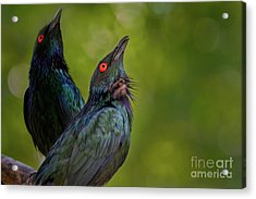What's Up There? Acrylic Print
