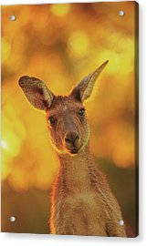 Acrylic Print featuring the photograph What's Up, Yanchep National Park by Dave Catley