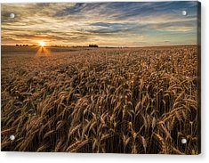 Wheat At Sunset Acrylic Print by Scott Bean