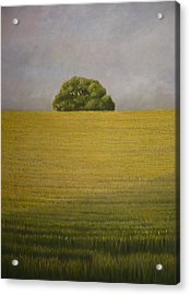 Wheat Field Acrylic Print