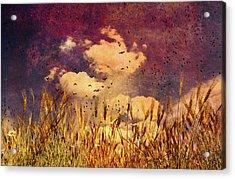 Wheat Field Dream Acrylic Print by Bob Orsillo