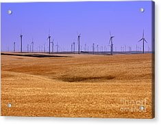 Wheat Fields And Wind Turbines Acrylic Print by Carol Groenen