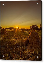 Acrylic Print featuring the photograph Wheat Shocks by Chris Bordeleau