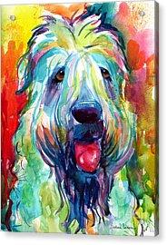 Wheaten Terrier Dog Portrait Acrylic Print by Svetlana Novikova