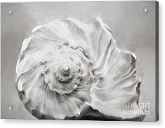 Acrylic Print featuring the photograph Whelk In Black And White by Benanne Stiens