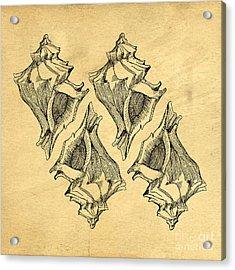 Acrylic Print featuring the digital art Whelk Seashells Vintage by Edward Fielding
