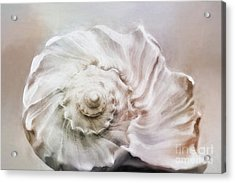 Acrylic Print featuring the photograph Whelk Shell by Benanne Stiens